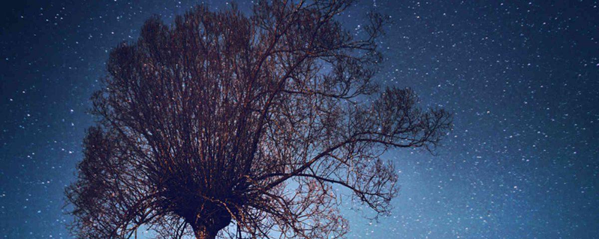 stars_tree-1600_large_2x